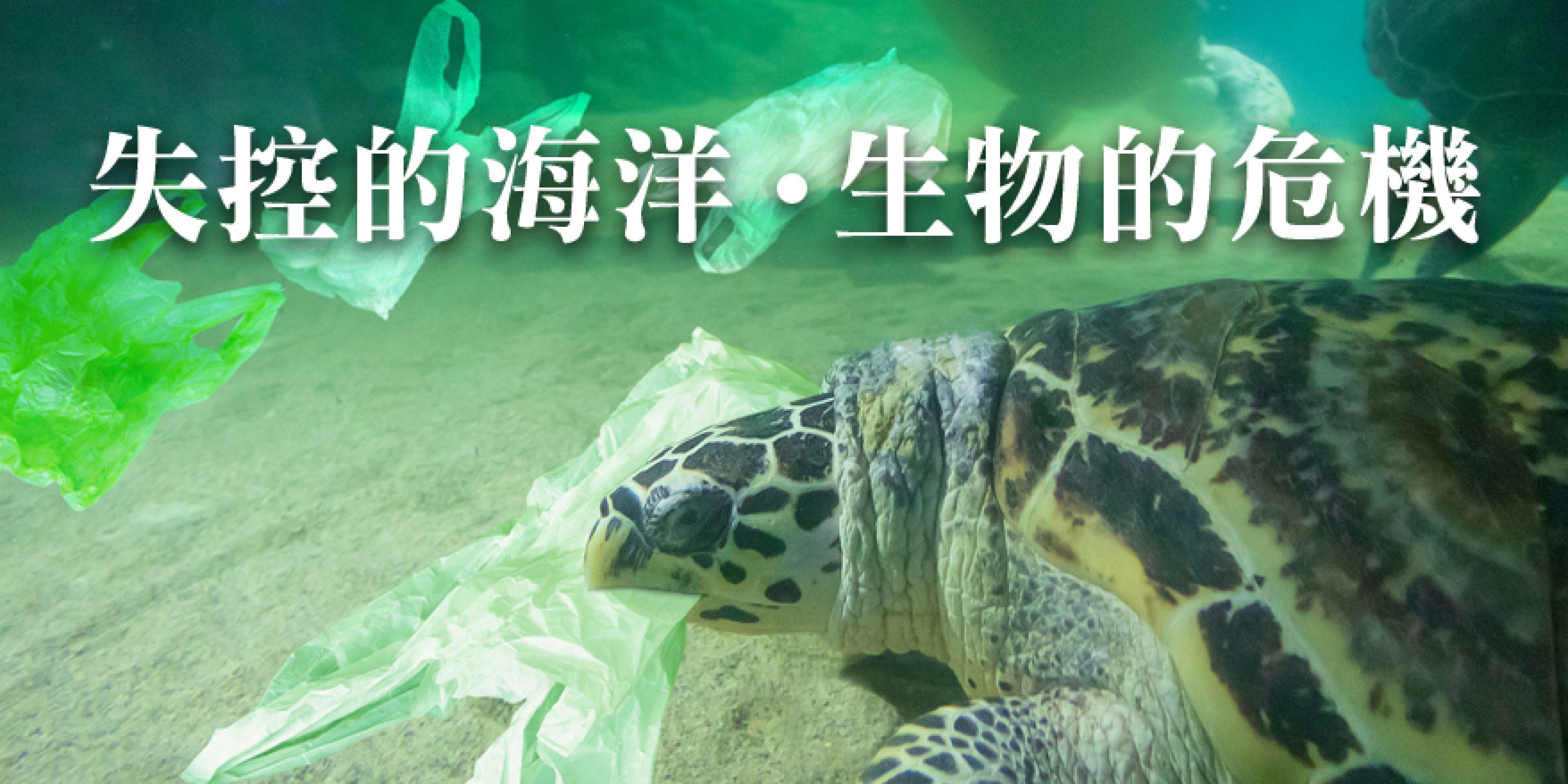【海洋台灣】優游海龜島 小琉球生態觀光大習題